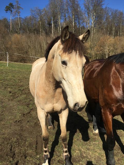 Für unsere Pony und Pferde Abenteuer werden Pferde und Ponys von unterschiedlichen Grössen eingesetzt. So kommen bei Ponyreiten, MUKI Reiten und Familienausflügen vor allem Ponys eingesetzt. Die Pferde vor allem für Reitunterricht und Reittherapie.