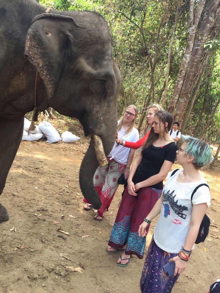 Etwas trauriger Elefant für die Touris