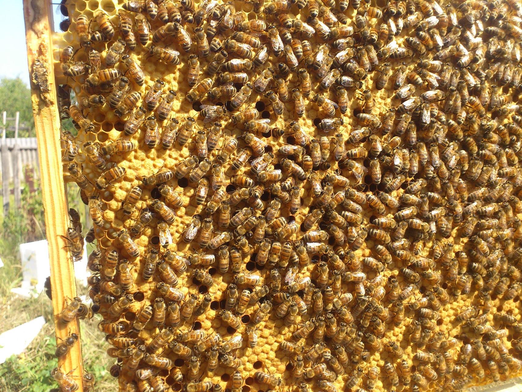 подробная инструкция по уходу за пчелами