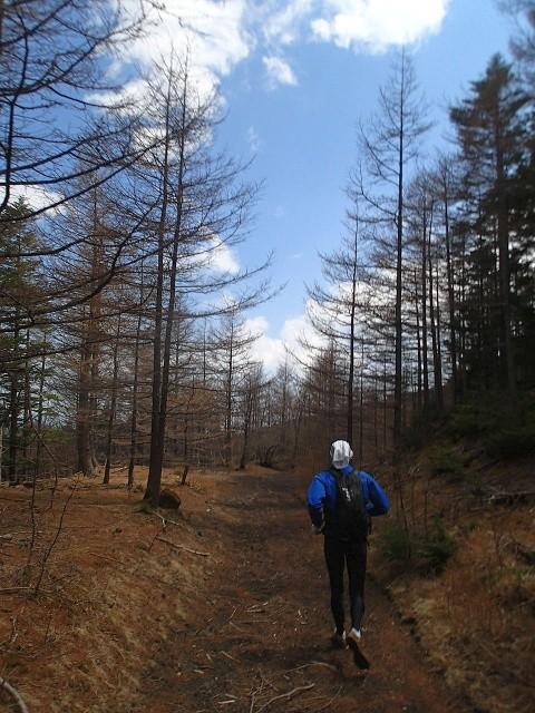 馬返しに向かう林道も快適