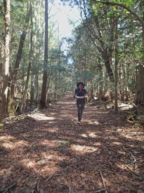 東剣、西剣(標高約1550m)を経て精進口登山道へ。原生林の中のまっすぐなトレイル