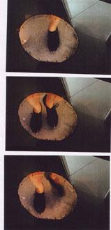 """""""Fliegen lernen"""", Super 8 Raum-Installation, Treppenhaus der Kunstakademie Düsseldorf, 1998"""