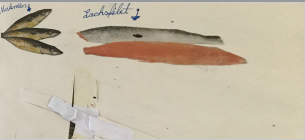 Studien Fisch, Stufe 5