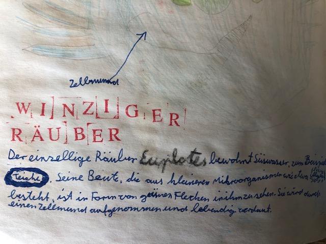 """Künstlerbuch """"Natur"""", Klara Heiss, Stufe 5"""