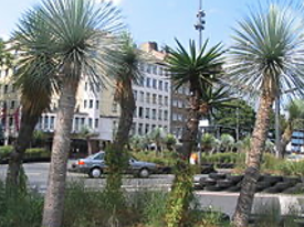 Yucca-Palmen, Tita Giese, Düsseldorf