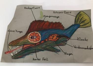 Aufbau des Fisches, Stufe 5