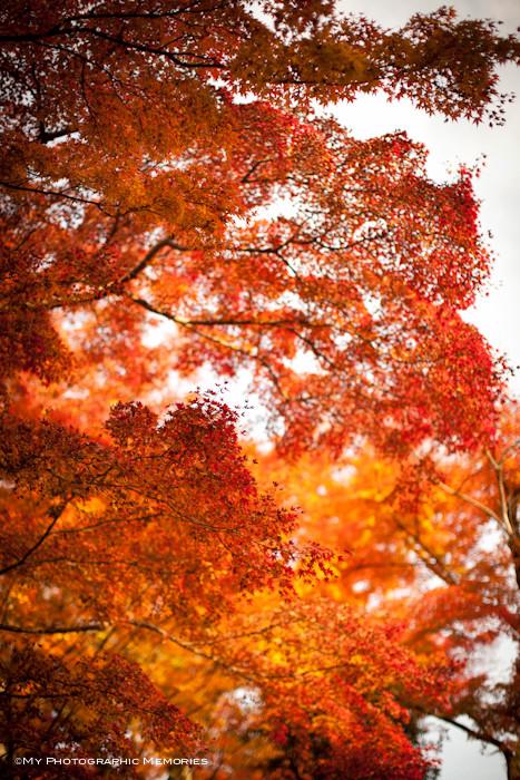 燃えるような紅葉☆最高の撮影日和です☆