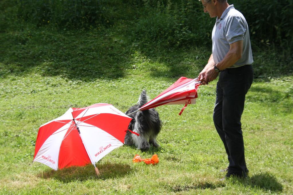 vor den Schirmen habe ich auch keine Angst.