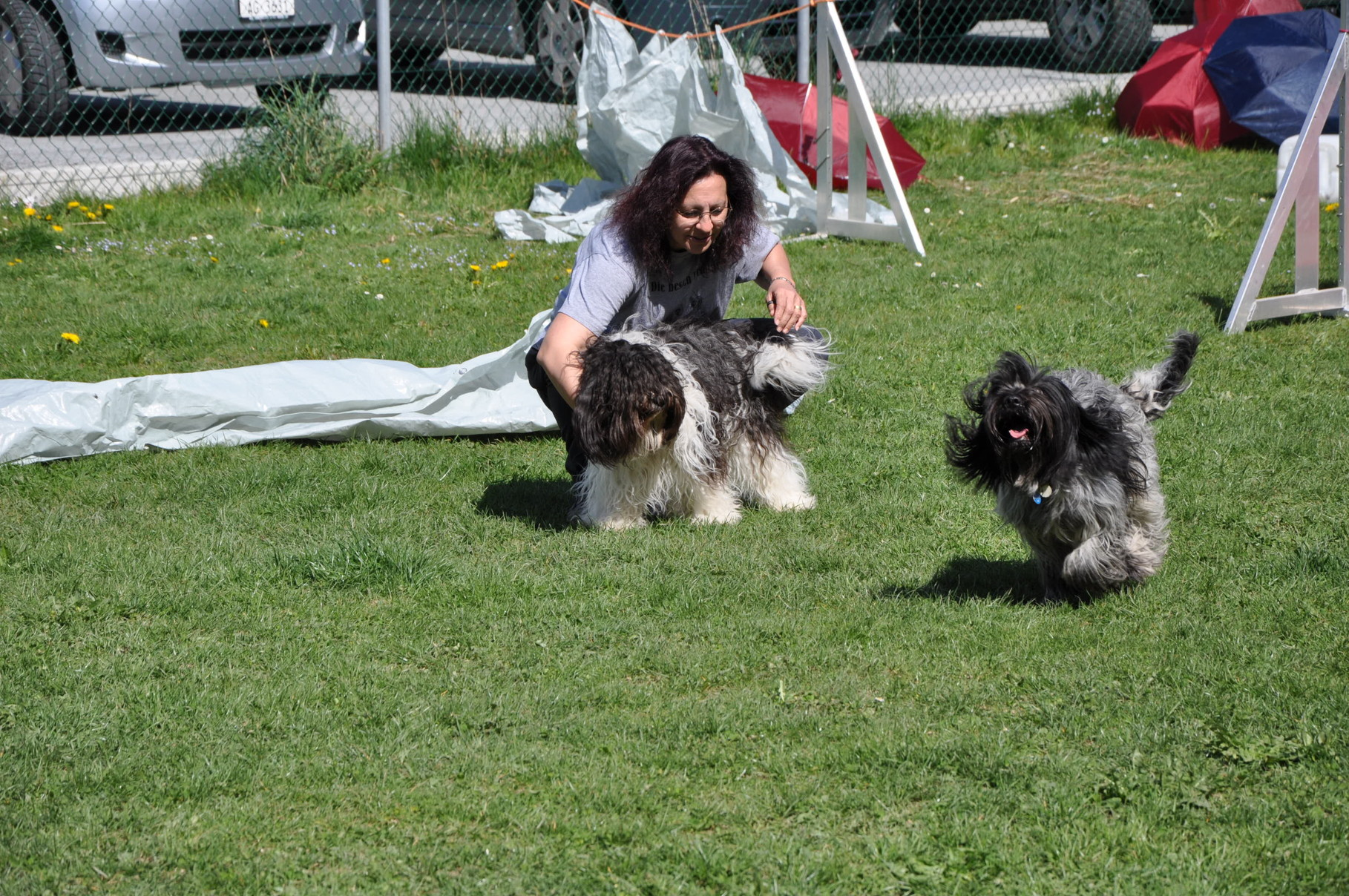 Wie verhält sie sich mit anderen Hunden