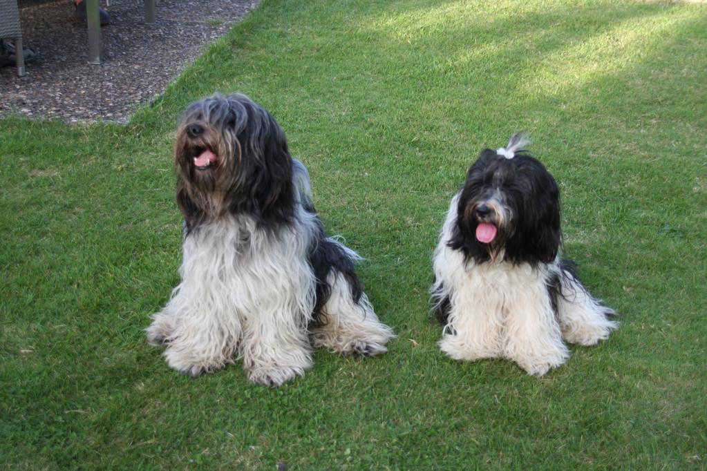 Filou und seine Schwester Linda