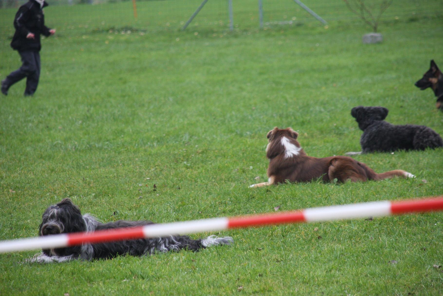 Fünf Minuten müssen die Hunde bleiben. Auch wenn einer aufsteht.
