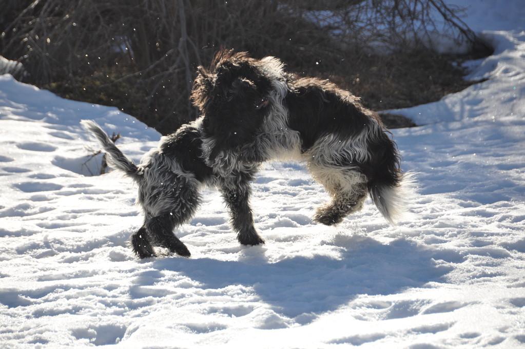 Wir tanzen im Schnee