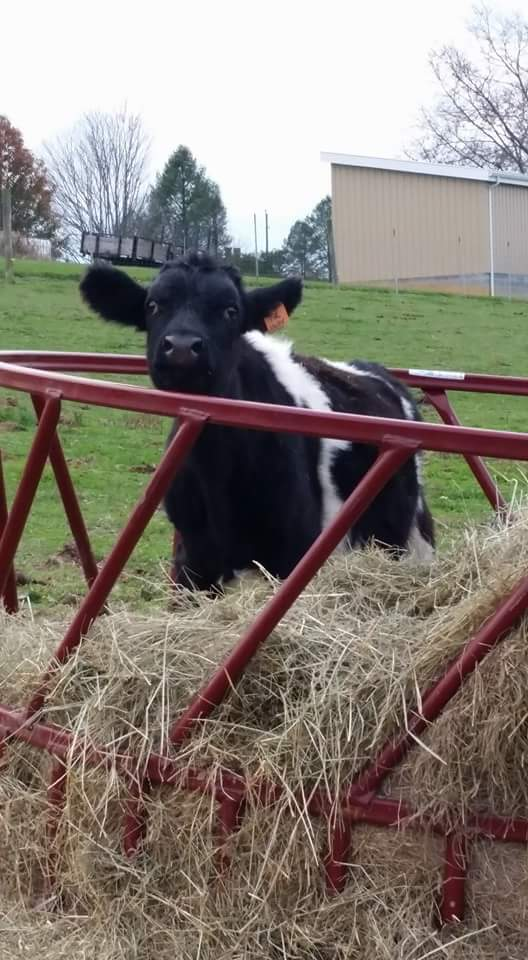 Mooove along...nothing to see here : )