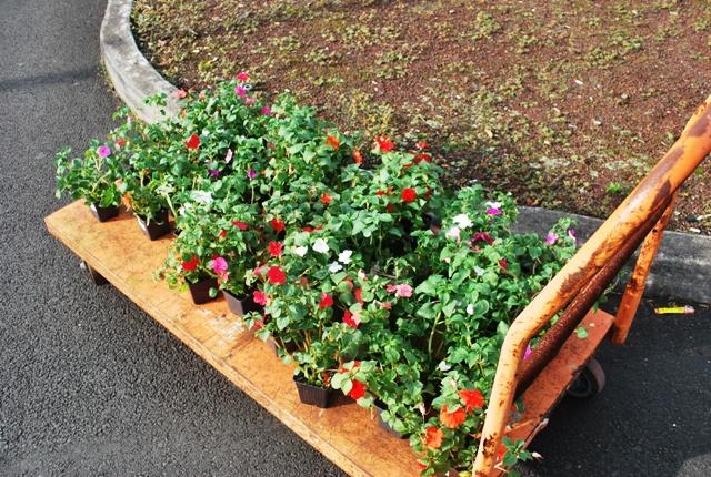 近所のホームセンターで毎週購入していたお花さんたち