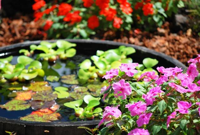 庭のお花さんたちが育つ