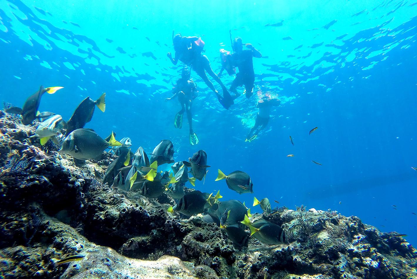 Snorkel en Isla Espíritu Santo Baja California Sur