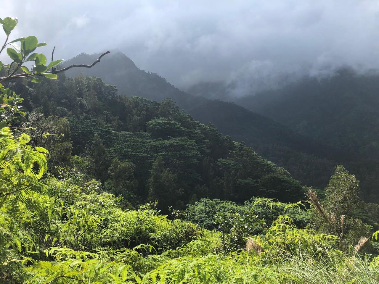 View off Okolehao Trail into the jungle