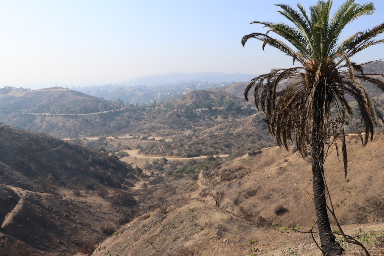Looking down to Hollywood you can see an half burnt palm tree and the smoke of Malibu Fire in the distance