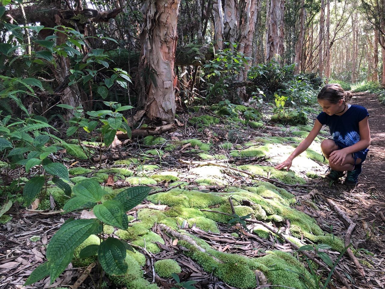 Forest Moss on Kuilau Ridge