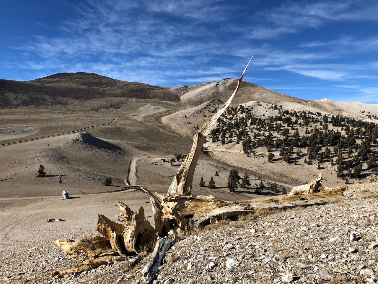 ...here at 3400m there we still left overs of Bristlecone trees