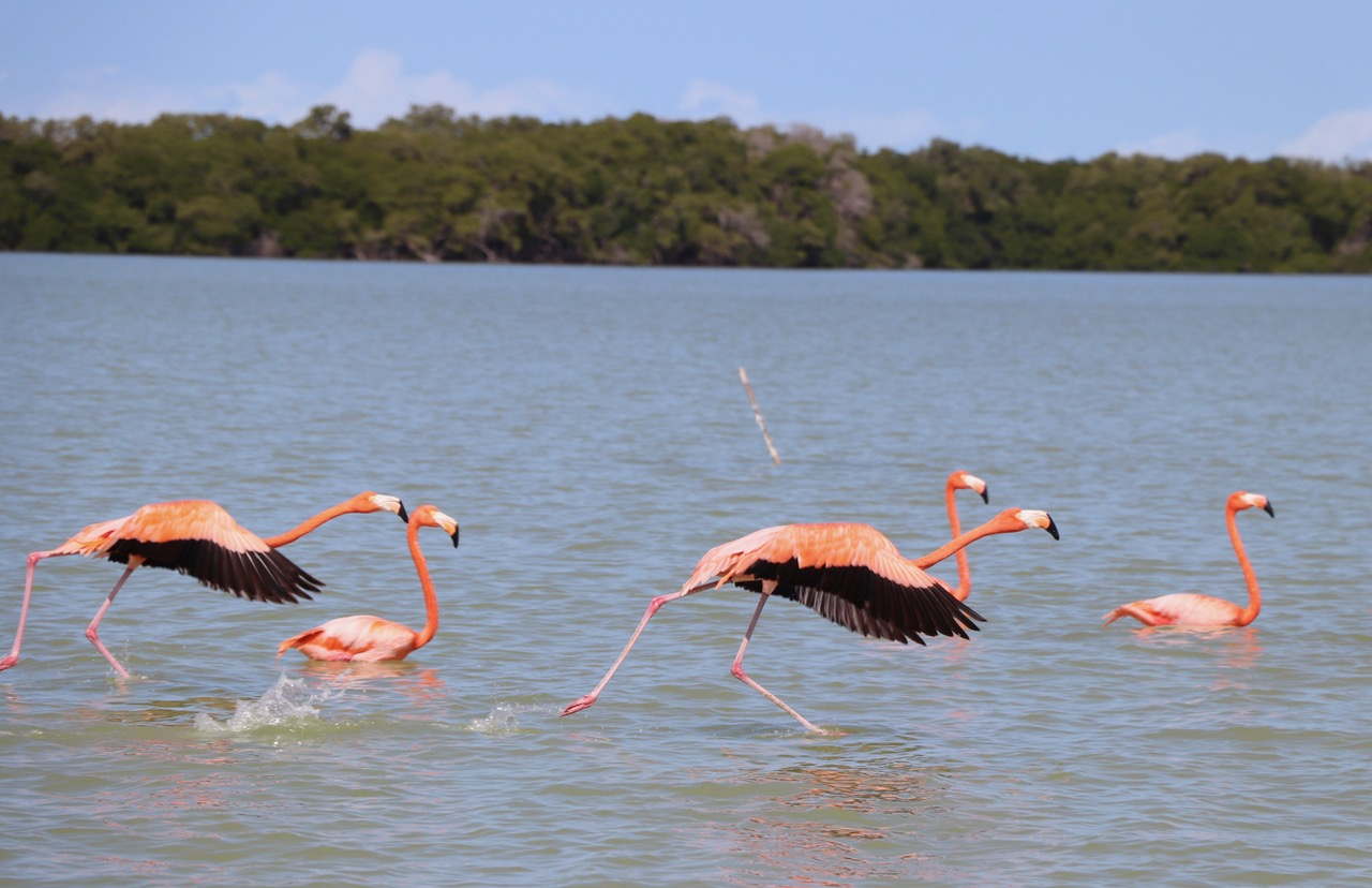 Flamingos eat up to 10hours a day
