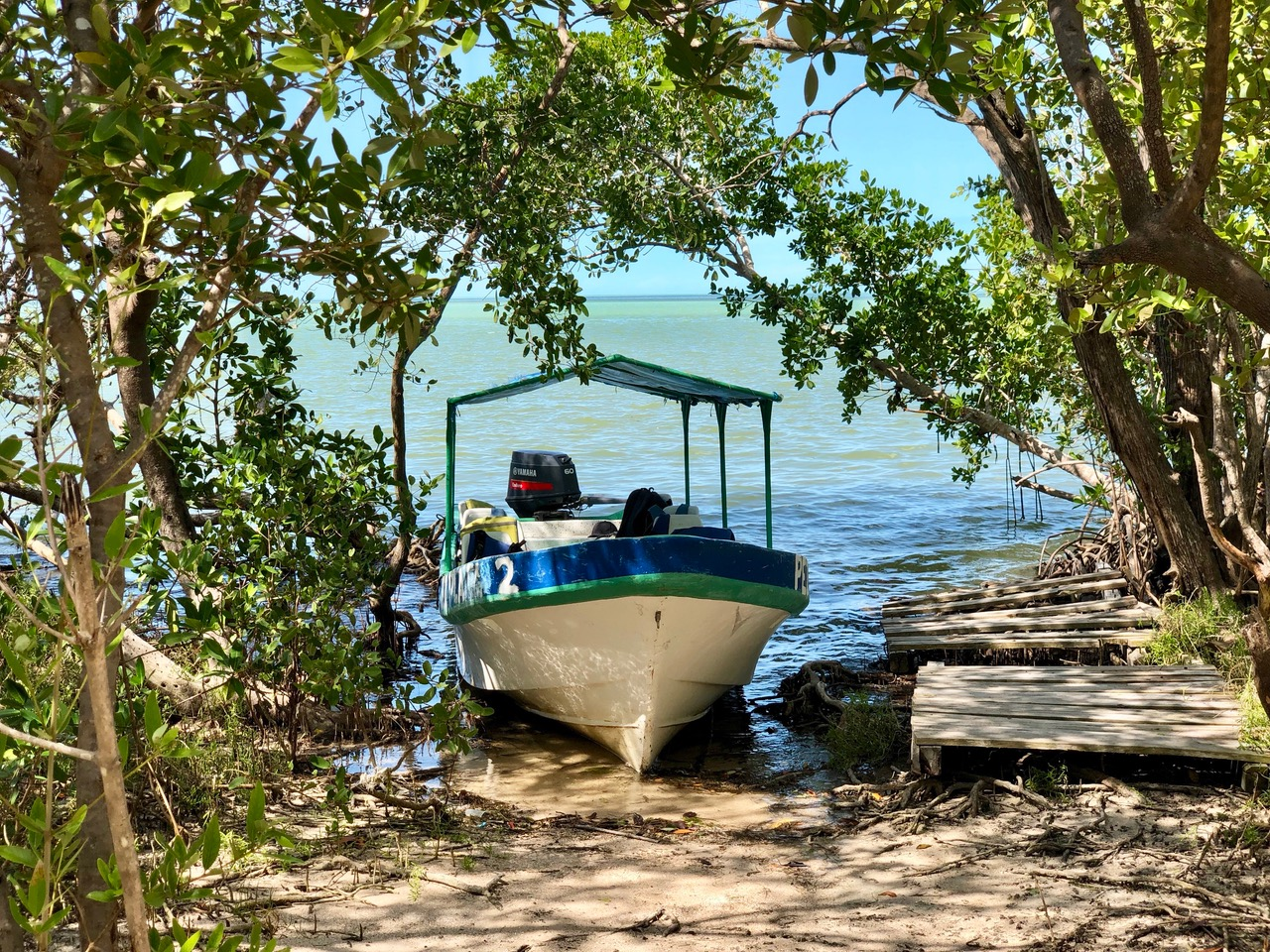 our stop off in the mangroves