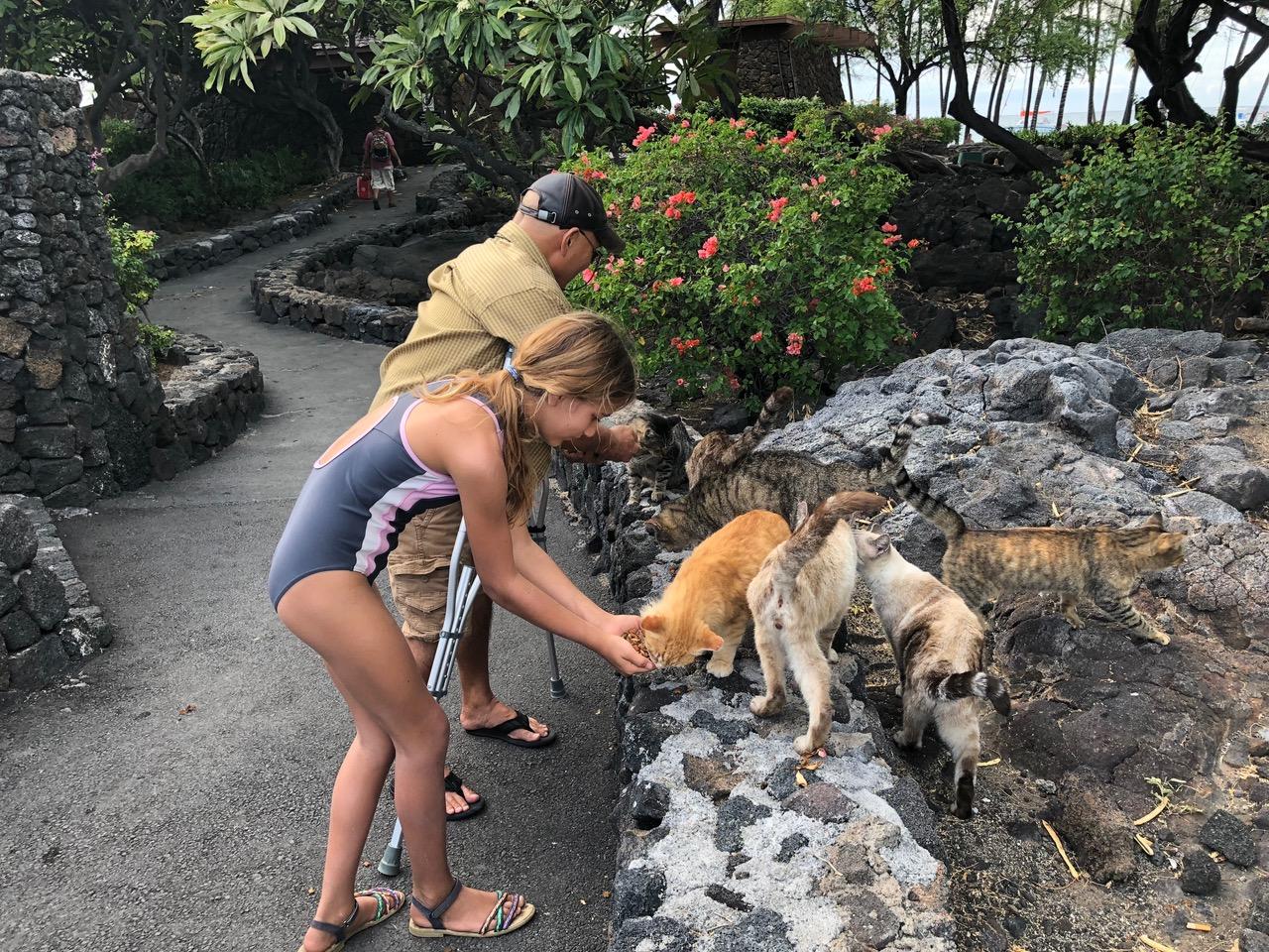 Big Island has a lot of wild cats...