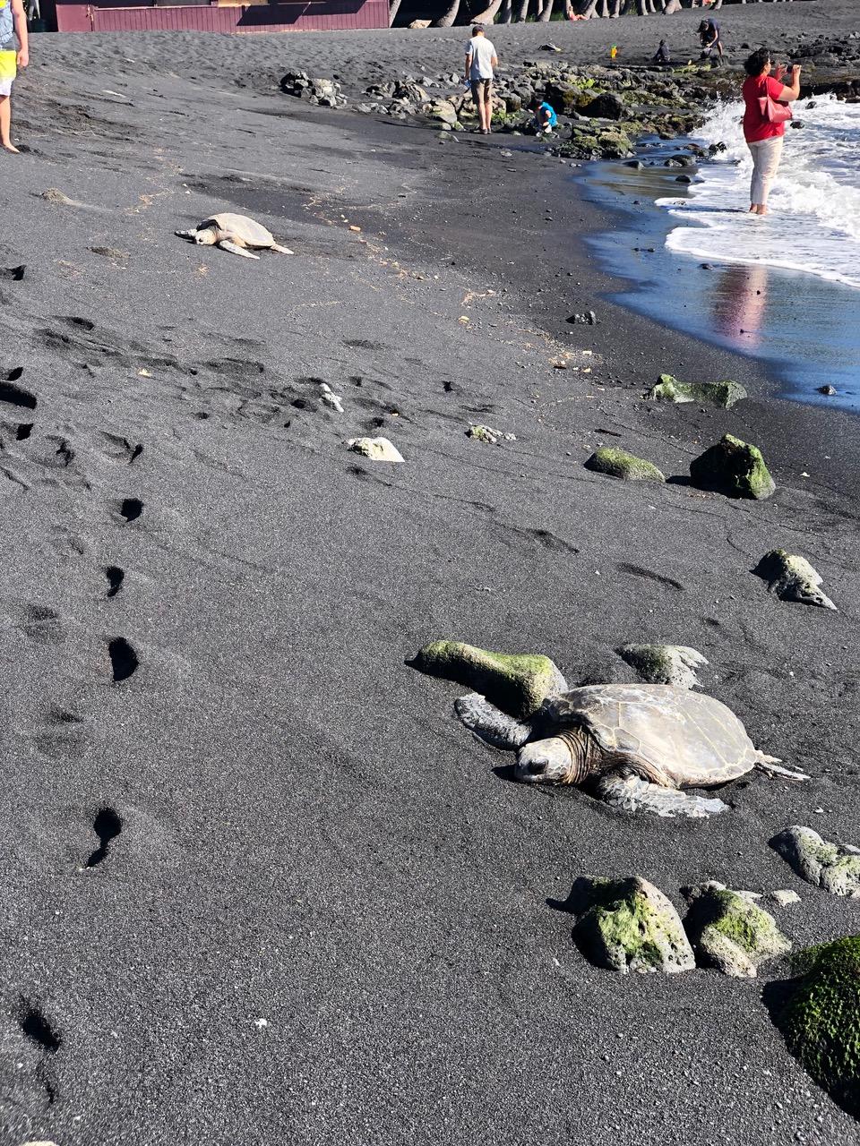 ...green turtles...