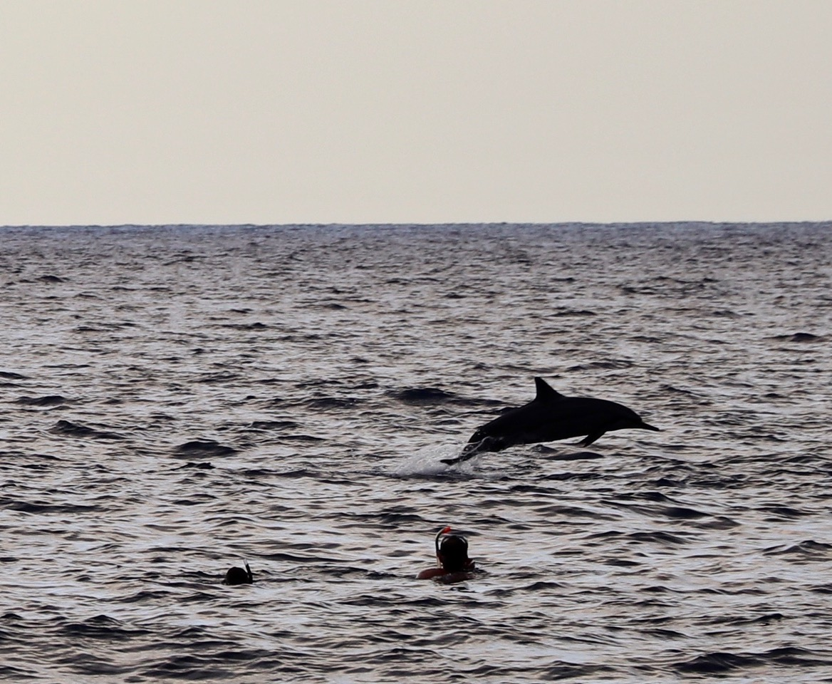 ...it was amazing swimming around these beautiful creatures, so elegant and not shy at all...