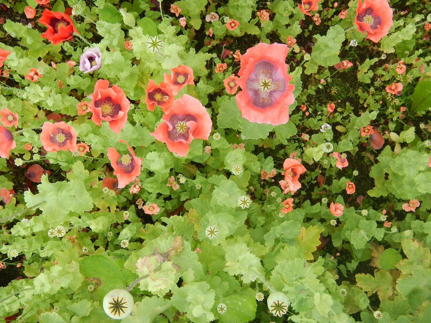 Bauerngarten auf Aarø