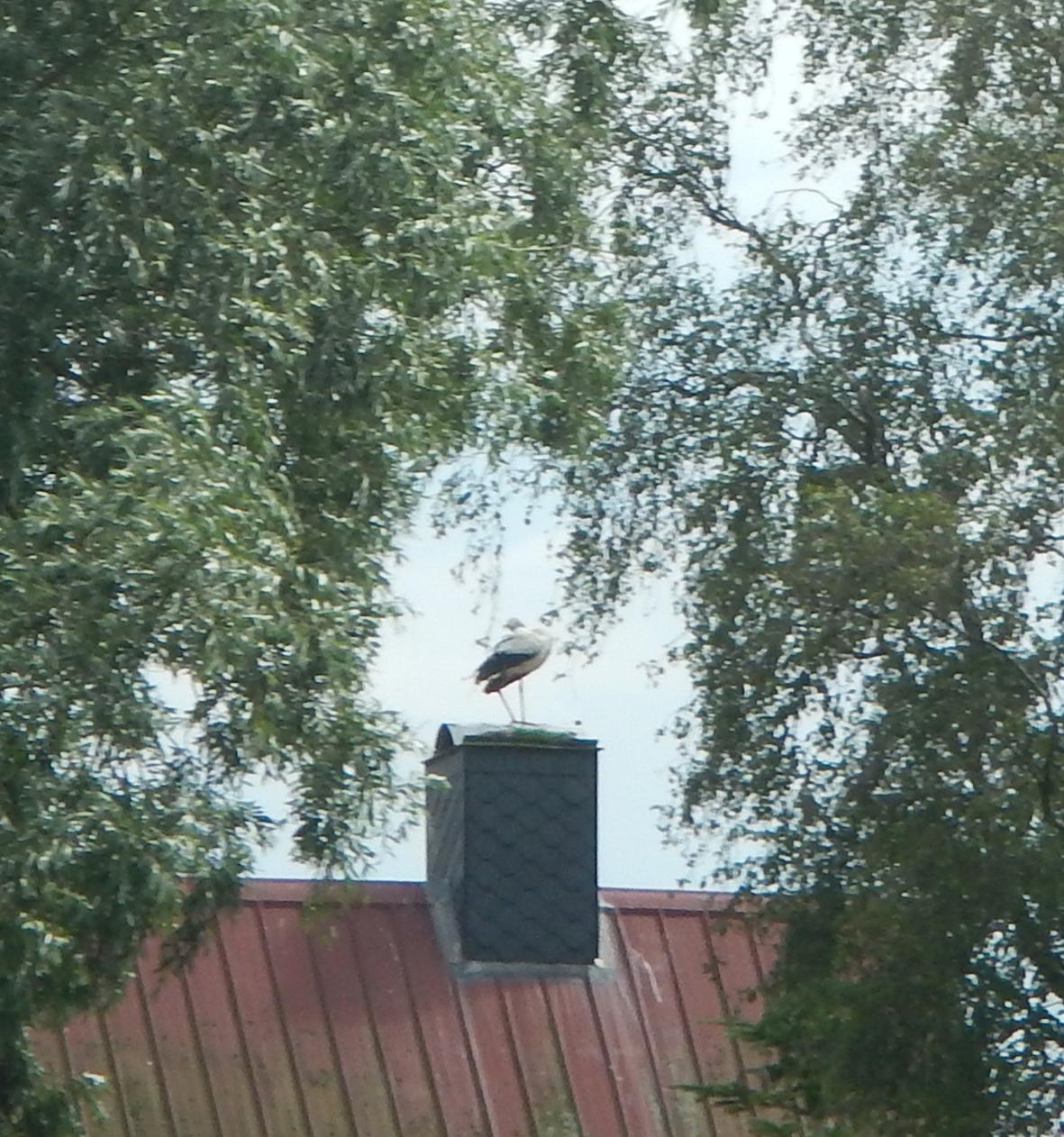 Storch, irgendwo in der Bildmitte