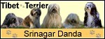 "Tibet-Terrier vom Zwinger ""Srinagar Danda"""