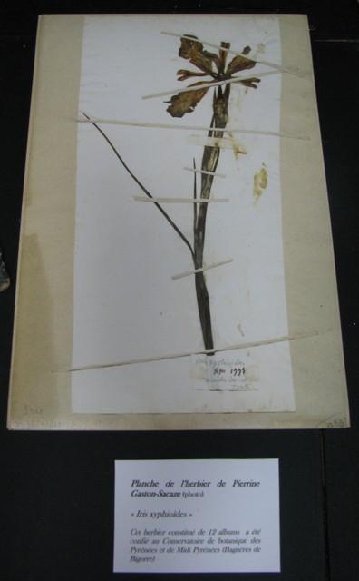 Planche de l'herbier personnel de Pierrine