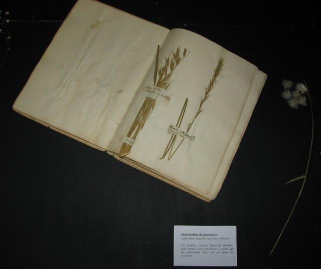 Herbier de graminées réalisé par Pierrine