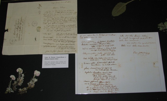 Lettre de Pierrine à Bubani, savant italien