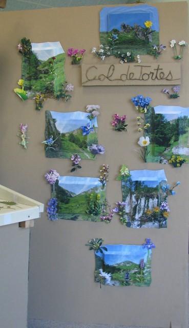 Paysages et flore du Col de Tortes