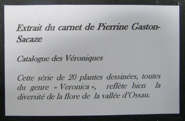 Catalogue des Véroniques