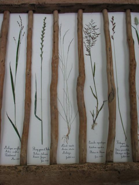 Herbier de graminées de la vallée d'Ossau