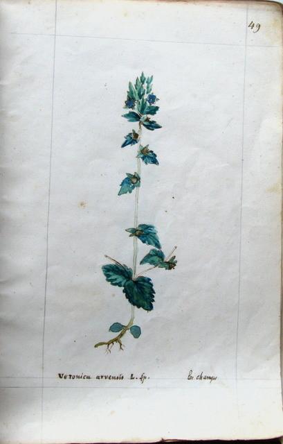 Catalogue des Véroniques, extrait du carnet de Pierrine