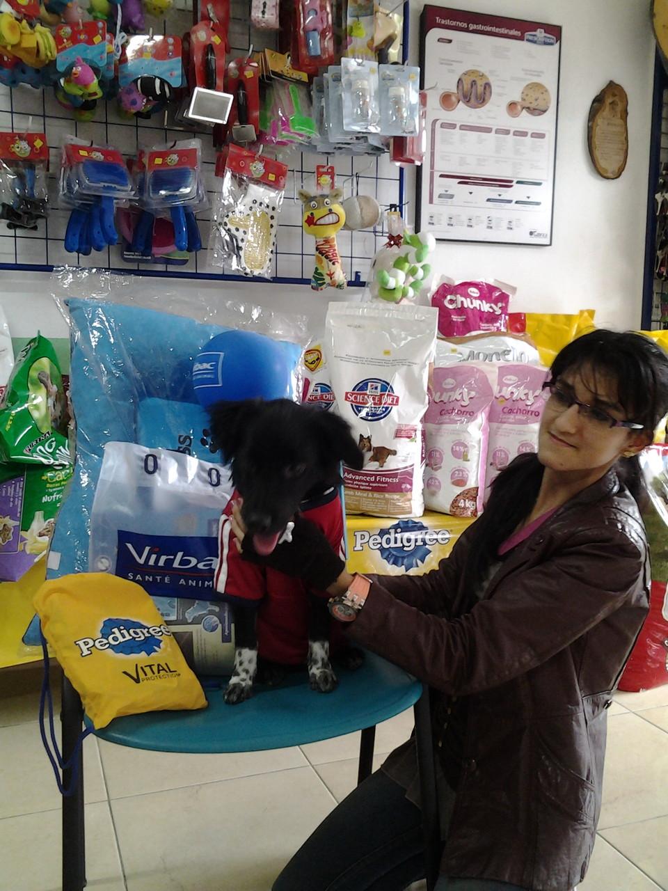 JERITO -poodle - Ingrid Pinzon