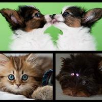 VK - группа для ВСЕХ, Продажа домашних животных!