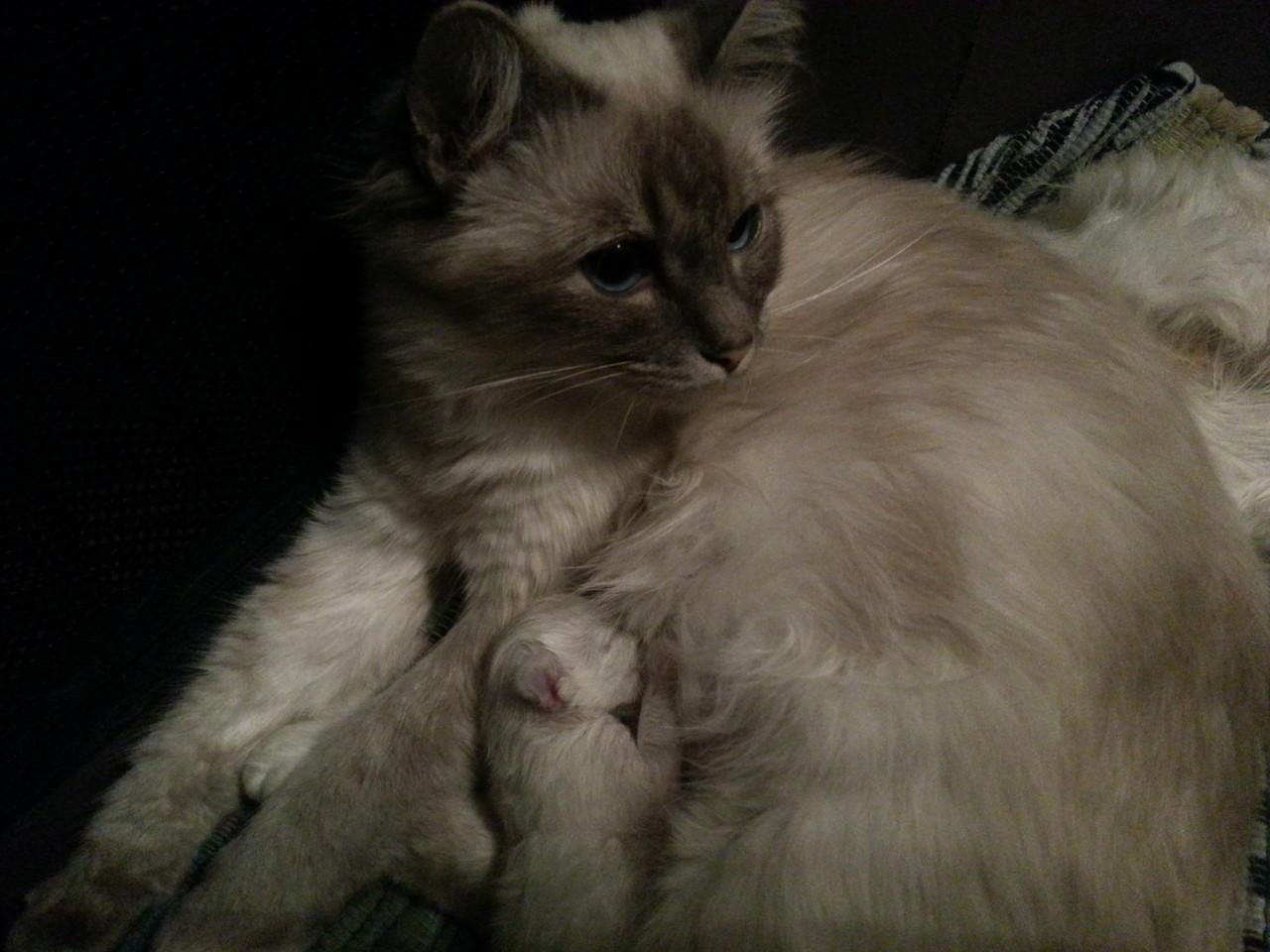mamma Thais ed il suo cucciolo a 3 giorni