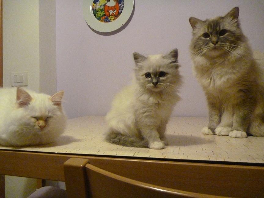 Thais con suo papà Quasimodo e Tiffany
