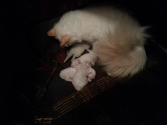 Zia Tiffany che allatta tutti i cuccioli a 4 giorni