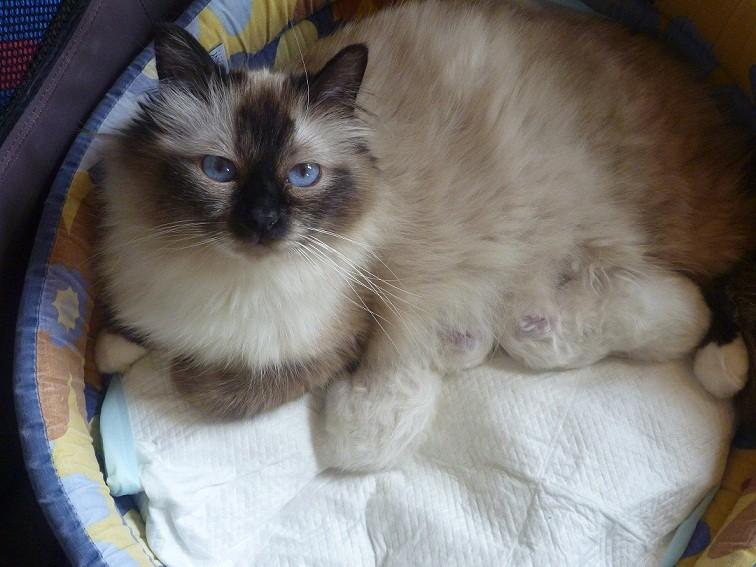 Mamma Yvette con Toffee e Tyson a pochi giorni dalla nascita