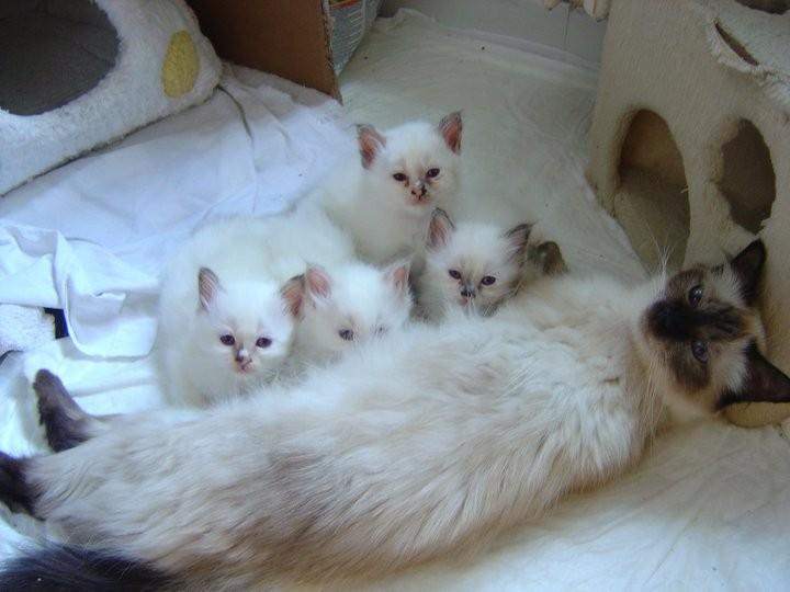 Yvette ... e i suoi cuccioli