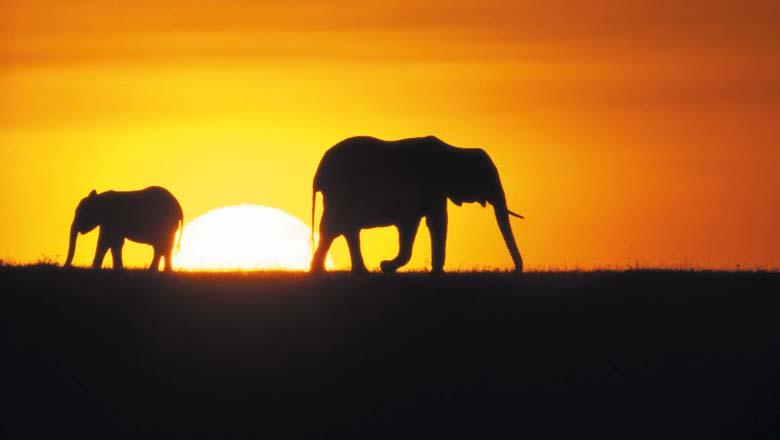 Kenia Safari Rundreisen & Baden
