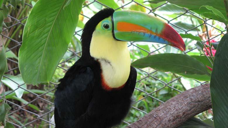 Costa Rica Rundreise