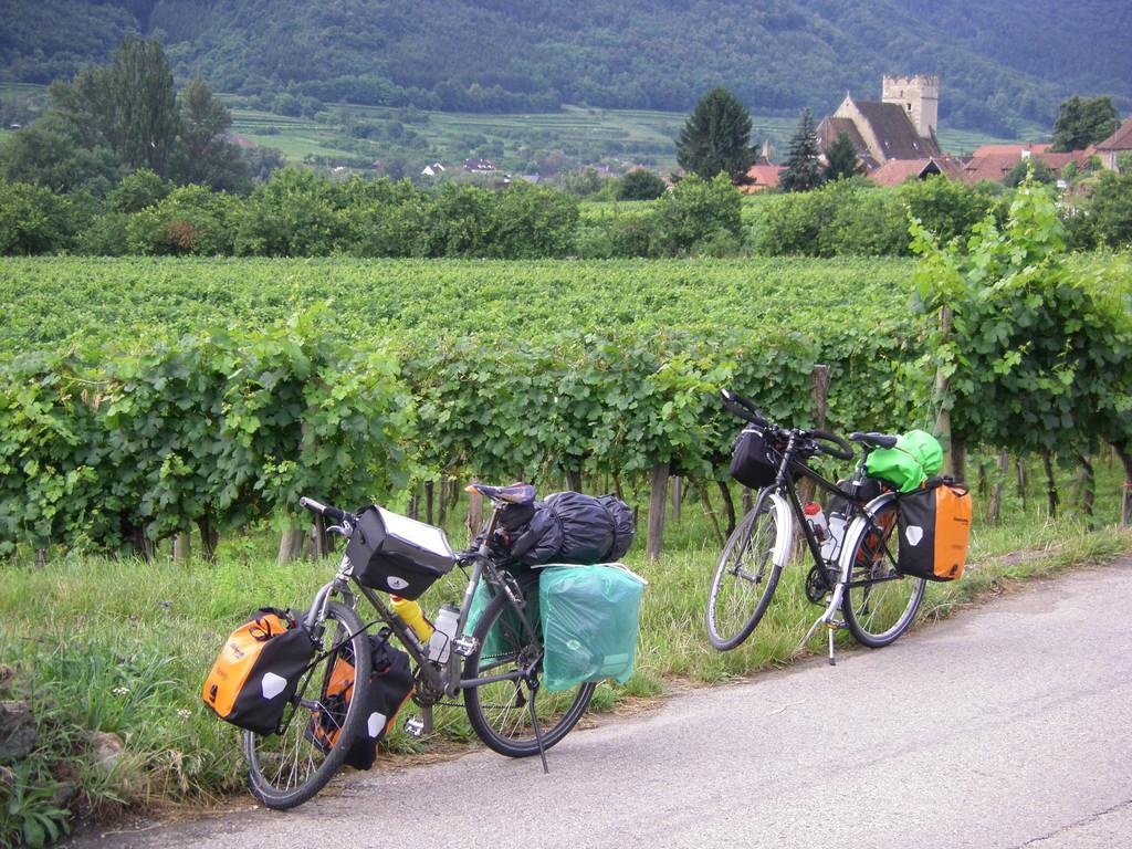 Dans les vignes de Wachau.
