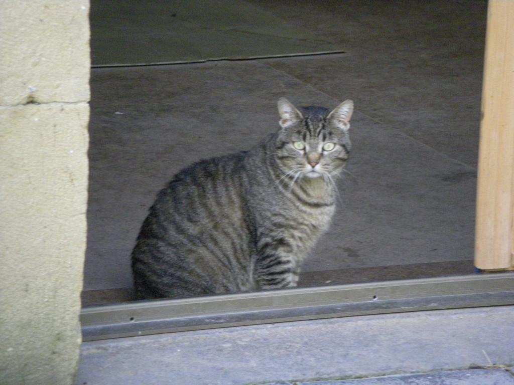 L'autre chat de la maison. Mieux valait ne pas s'approcher !